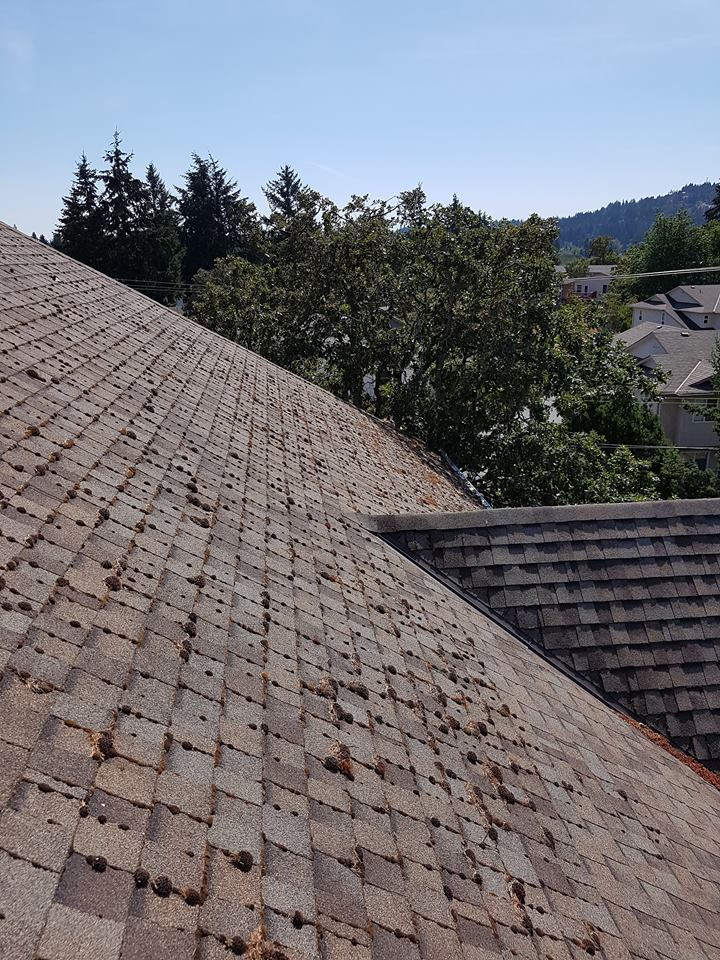 roof cleaning services victoria bc